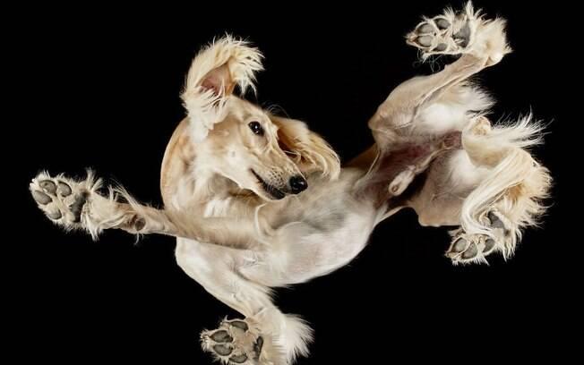 Esses cães vistos por baixo são a coisa mais fofa!