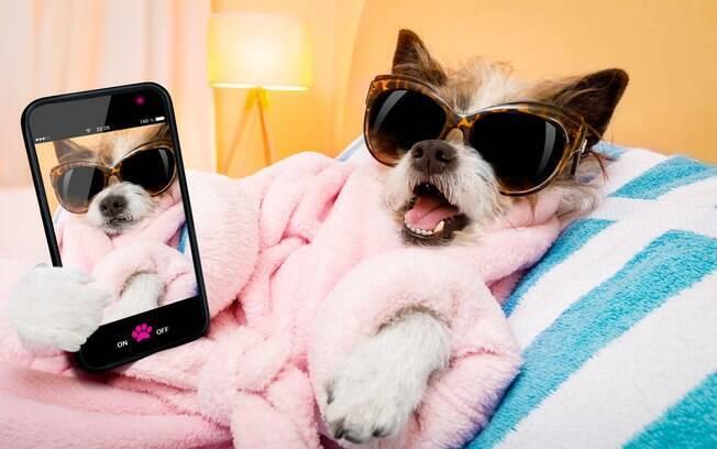 Uma rede social para pets foi criada no Brasil