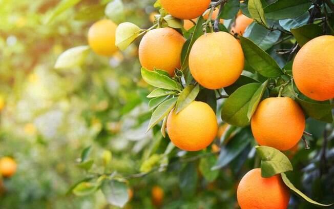 Dicas da Benzedeira: o poder da laranja