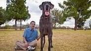 Gigantes: confira os cinco maiores cães do mundo