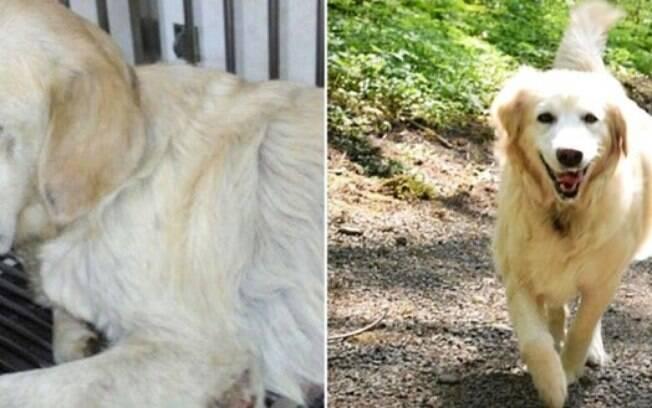 Cachorro abandonado, foi resgatado.