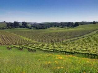 Sonoma. Vizinho do vale estrelado, lugar tem vinhos que aguçam o paladar