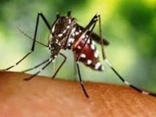 A nova técnica consiste em capturar mosquitos e analisá-los