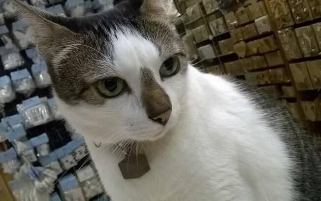 Rubinho Correia, um gato com sobrenome, vive e circula tranquilamente em um shopping do Rio de Janeiro