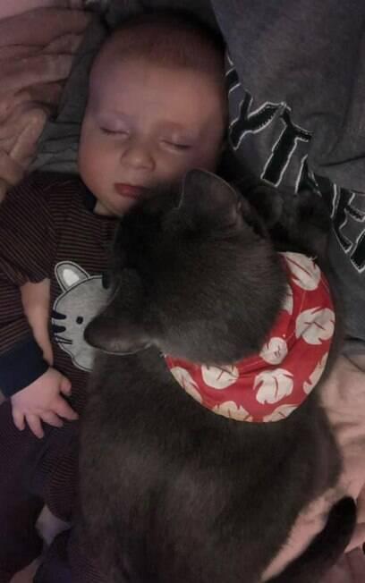 Bebê dormindo com gato cinza em cima dele