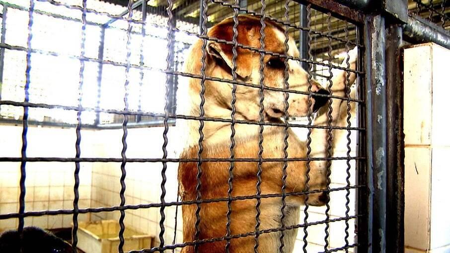 Dificuldades financeiras não é motivo para o abandono de um animal de estimação