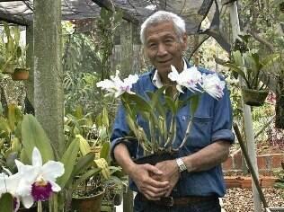 Denitiro Watanabe cultiva mais de 900 orquídeas