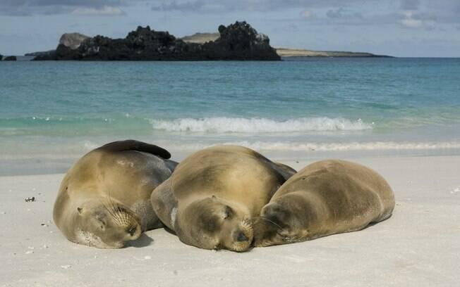 Leões marinhos parecem não se incomodar com a presença maciça dos turistas