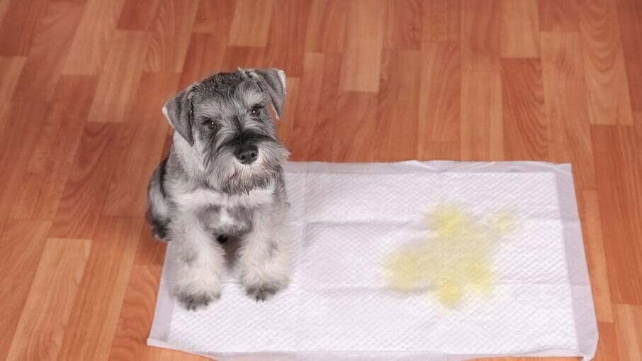 Ensinar o animal a fazer xixi no lugar certo é uma das formas de melhorar a relação entre cachorro e dono