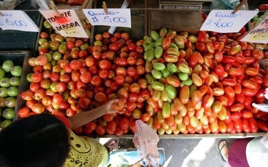 Alto preço do tomate faz a alegria de produtores de São Paulo - Home - iG