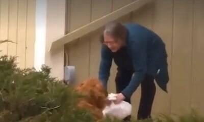 Cão entrega compras para vizinha idosa de quarentena
