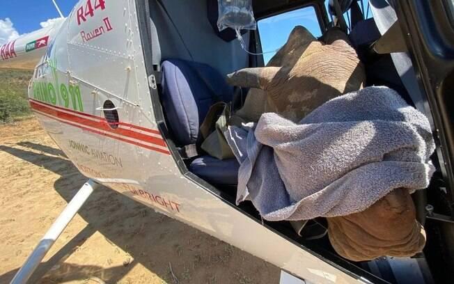 Rinoceronte resgatado na África do Sul