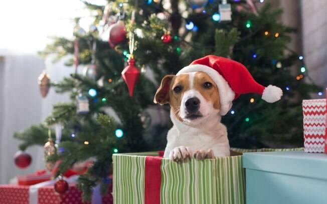 Antes de dar um animal de presente de Natal é preciso ter certeza de que a pessoa vai poder cuidar