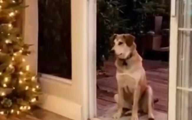 Cão não percebe que a porta de sua casa já está aberta, então fica esperando até alguém aparecer para abri-la
