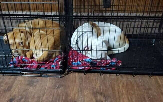 Zeus (marrom) dividindo seu cobertor com Athena (branca)
