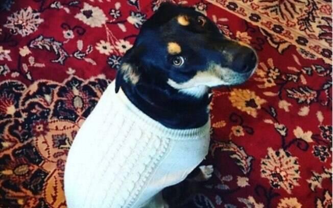 O cão Sully vive em Utah, oeste dos Estado Unidos com seus donos