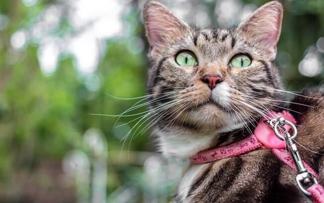 Confira quais as melhores opções de coleiras para gatos