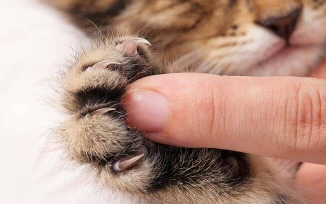 Os protetores de unha podem não ser bons para as unhas dos gatos