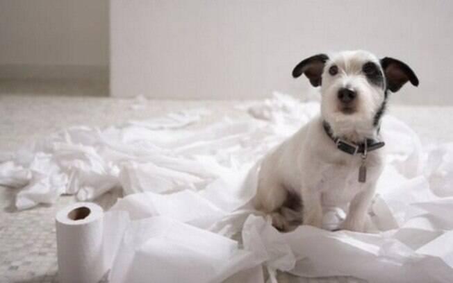 A copofragia é o hábito do cão comer as próprias fezes