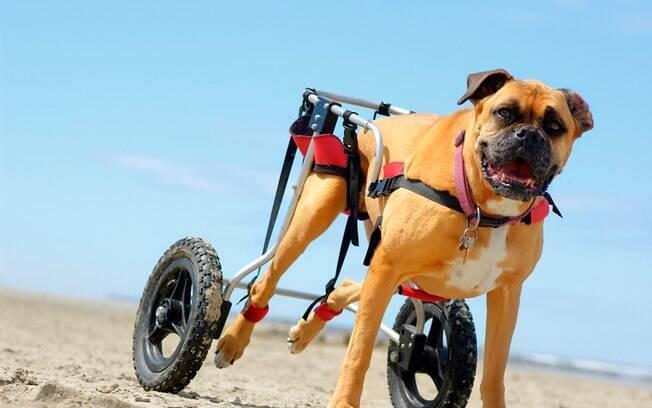 A cadeira de rodas para cachorro é a melhor alternativa para que um animal deficiente leve uma vida normal.