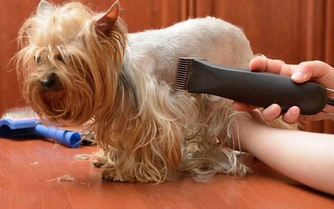 Tosar cachorro no verão pode ajudar a amenizar o calor que ele sente