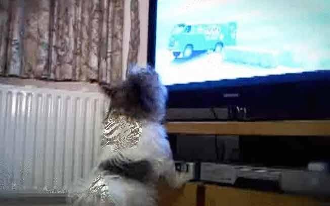 Cães não conseguem parar quietos ao assistir comercial