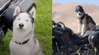 Conheça Sox, o cão motociclista que é aventureiro