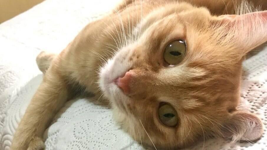 Jovem sofre golpe após anunciar desaparecimento de gato de estimação