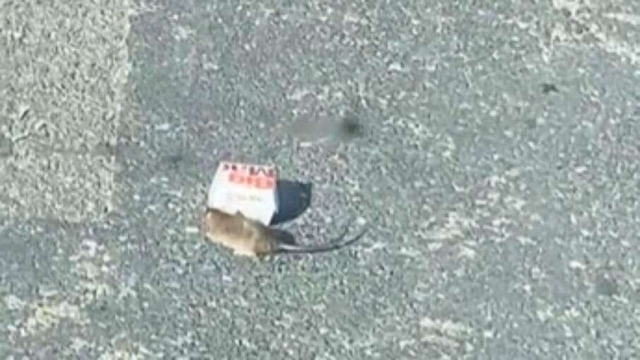 Rato carregando caixinha do McDonald´s pela rua