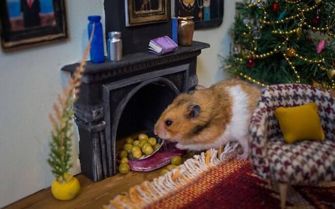 Essa casa de hamster é a coisa mais fofa que você verá hoje!
