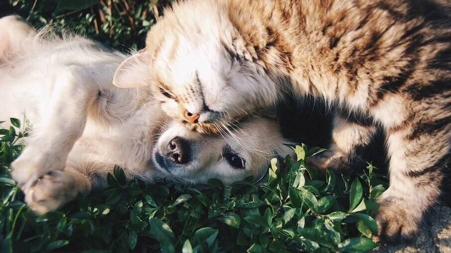 Adaptados ao ambiente e entre si, cães e gatos podem se tornar os melhores amigos