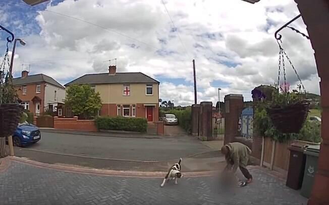 Cachorros atacam gato e o dono tenta impedir que eles matem o pet, mas não consegue