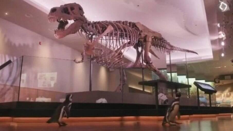 Cientistas descobrem nova espécie de dinossauro com mais de 15 metros; veja