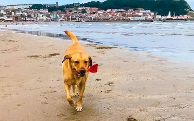 Molly pegando lixo deixado na praia