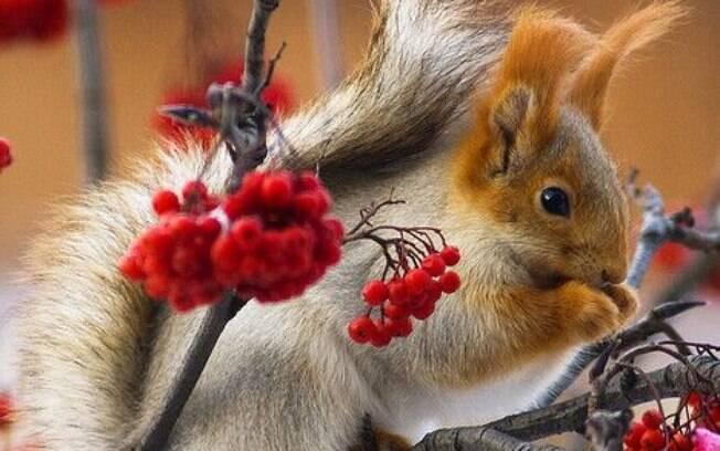 Esses esquilos fofos são ótimos motivos para fotografar a natureza