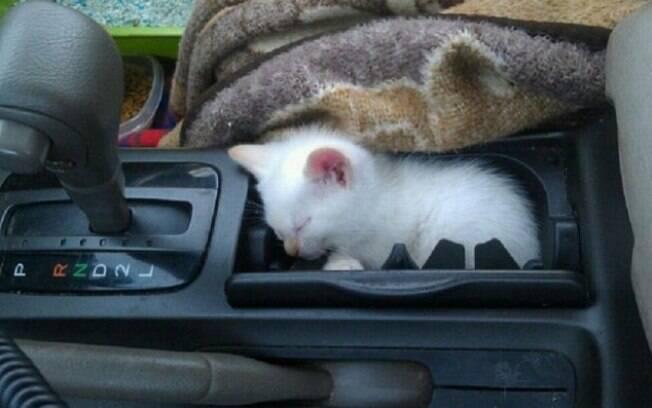 E esse gatinho dormindo dentro de um pequeno espaço do carro.