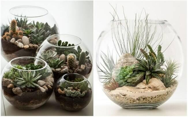 Por serem fáceis de criar e de cuidar, terrários de suculentas são uma boa opção para incluir plantas na decoração