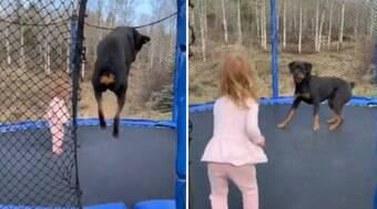 Menina de 3 anos e rottweiler protagonizam momento fofo