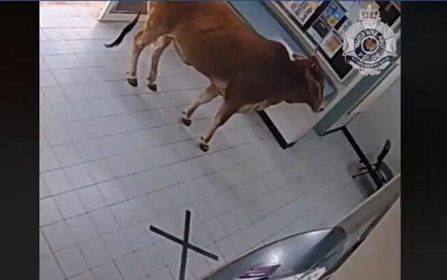 A imagem mostra a vaca dentro de uma delegacia de polícia na Austrália