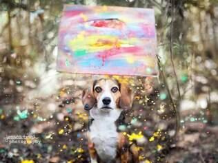 Jessica Trinh acredita que fotos produzidas podem ajudar na doação de cães