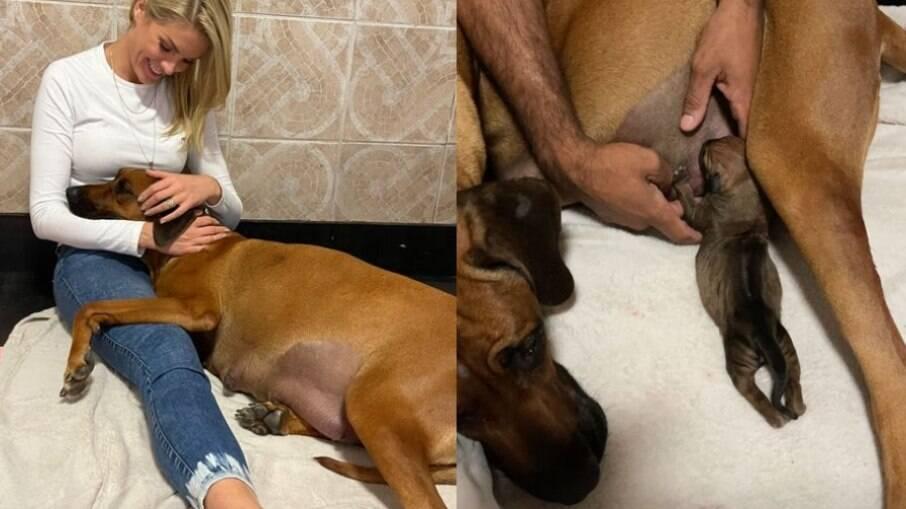 Ana Hickmann deu apoio emocional a cachorra que dava à luz a nada menos de 17 filhotes