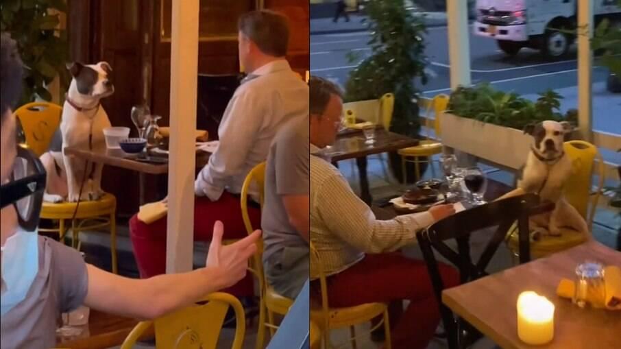 Homem e cachorro são vistos em restaurante
