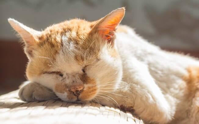 Como os gatos vão perdendo interesse pelo seu entorno, começam a dormir boa parte do dia. Por outro lado, perambulam durante a noite e miam mais frequentemente