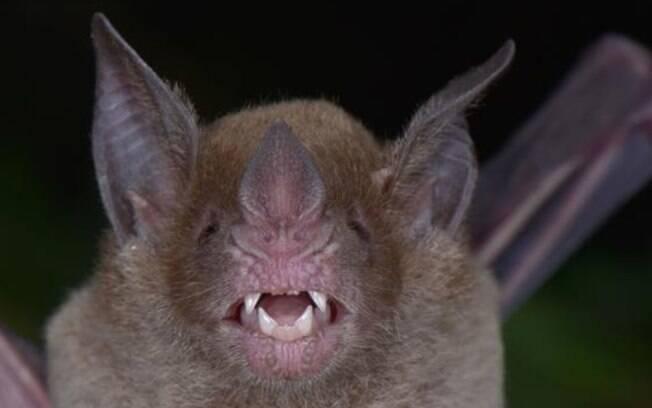 Morcegos invadiram a pequena cidade de Comodoro Py, que tem apenas 634 habitantes;