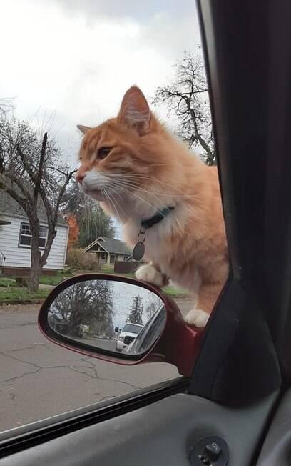 Gato antes de entrar no carro de April