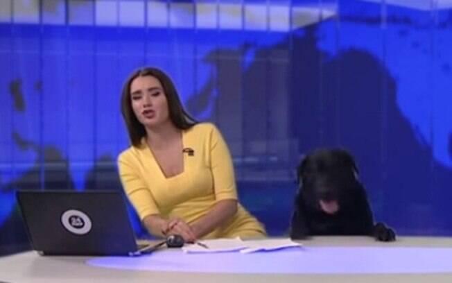 Esse vídeo de cachorro é hilário e viralizou na internet