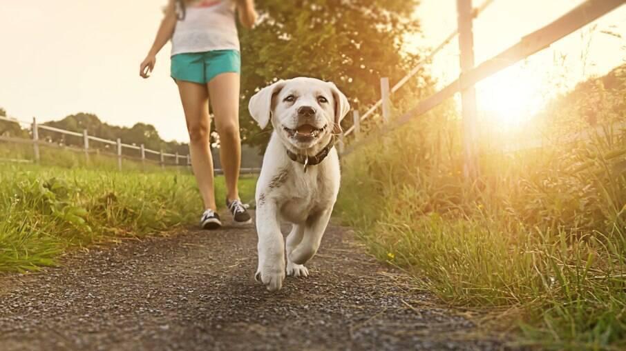 Para cães que passeiam por locais mais abertos, o apito pode ser útil para que os pets localizem os tutores com mais facilidade