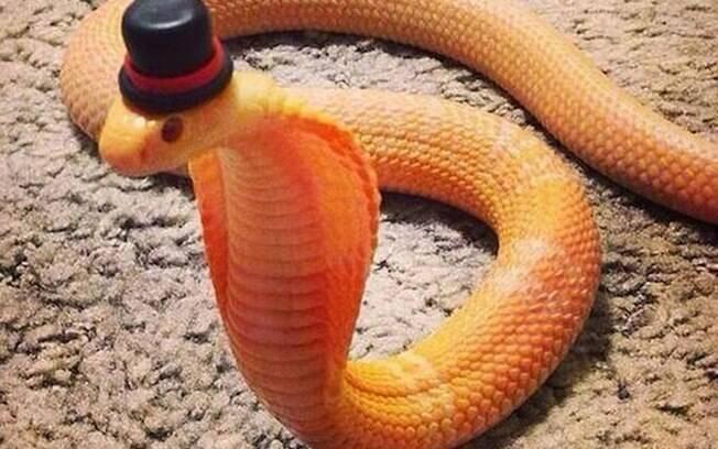 Uma cobra bem elegante de chapéu.