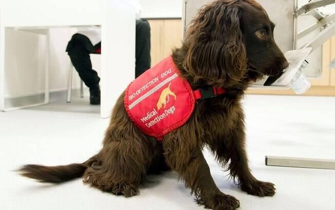 ONG e pesquisadores irão treinar cães para farejar o novo coronavírus