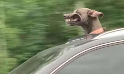 Cachorro curte teto solar de carro e família cai na risada